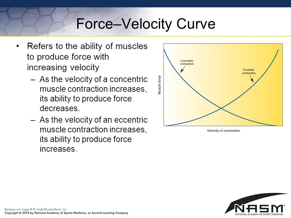force velocity relationship of muscle contraction headache