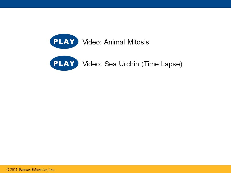 Video: Sea Urchin (Time Lapse)