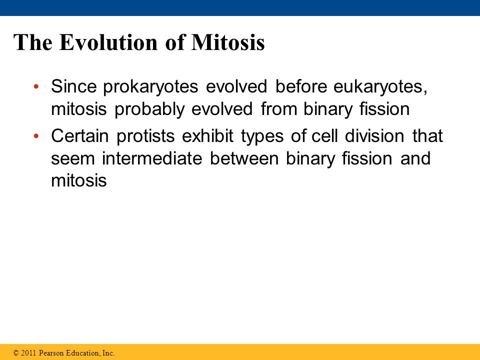 The Evolution of Mitosis