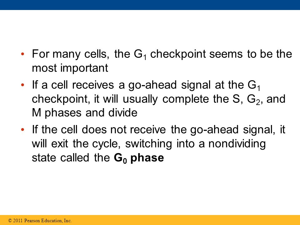 For many cells, the G1 checkpoint seems to be the most important