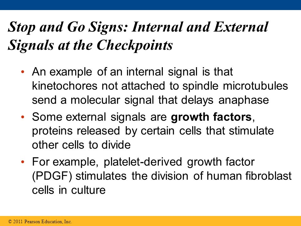 Stop and Go Signs: Internal and External Signals at the Checkpoints