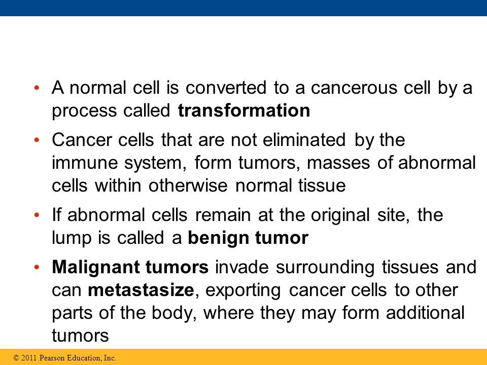 A normal cell is converted to a cancerous cell by a process called transformation