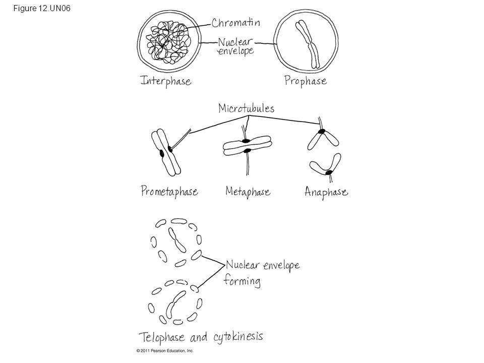 Figure 12.UN06 Figure 12.UN06 Appendix A: answer to Test Your Understanding, question 10