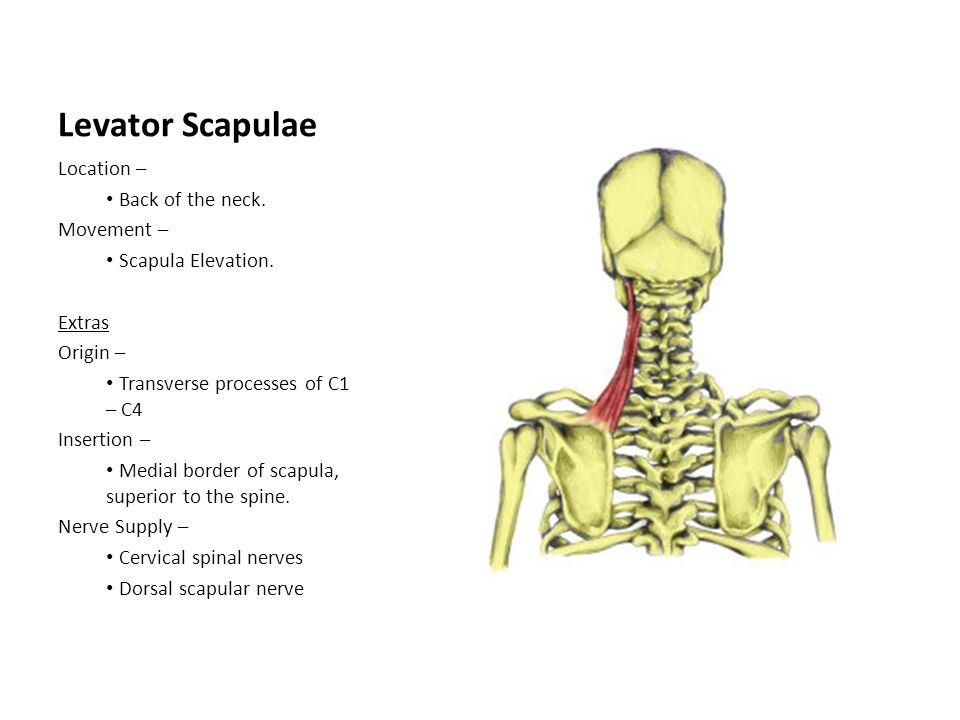 Nerve conduction study  Wikipedia
