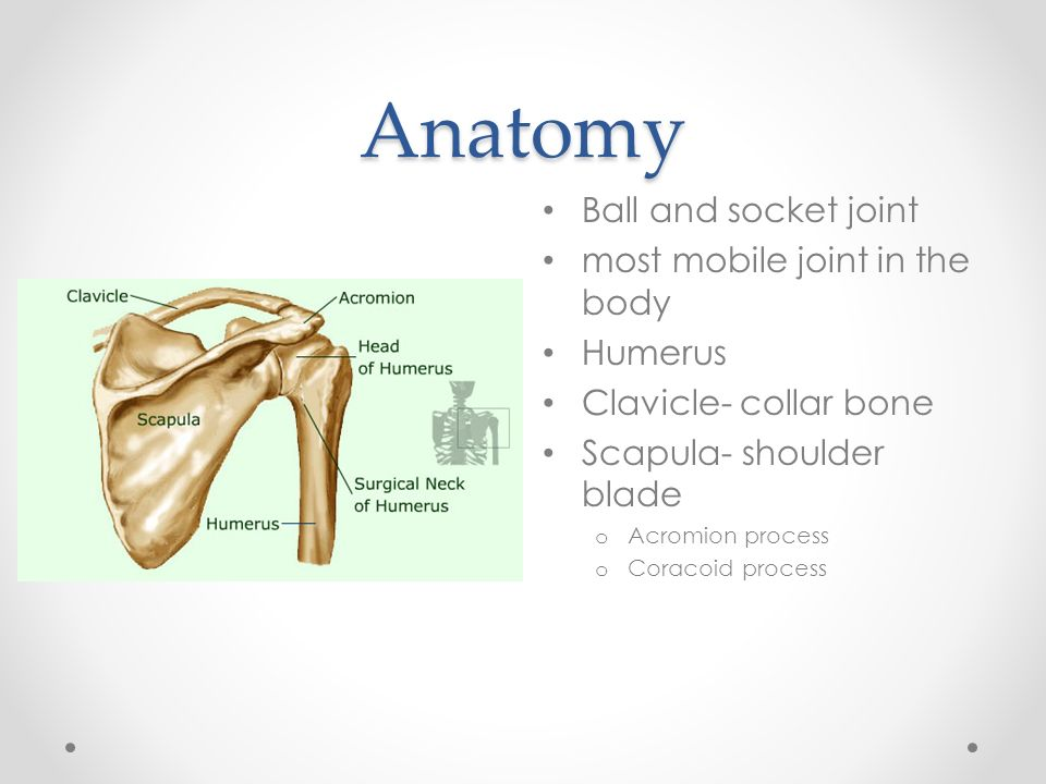 Ch. 21 Shoulder. - ppt download