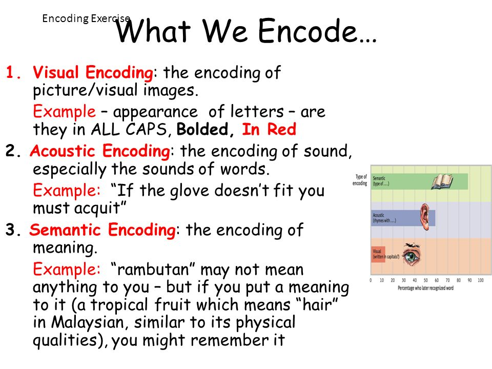 What We Encode… Encoding Exercise. Visual Encoding: the encoding of picture/visual images.