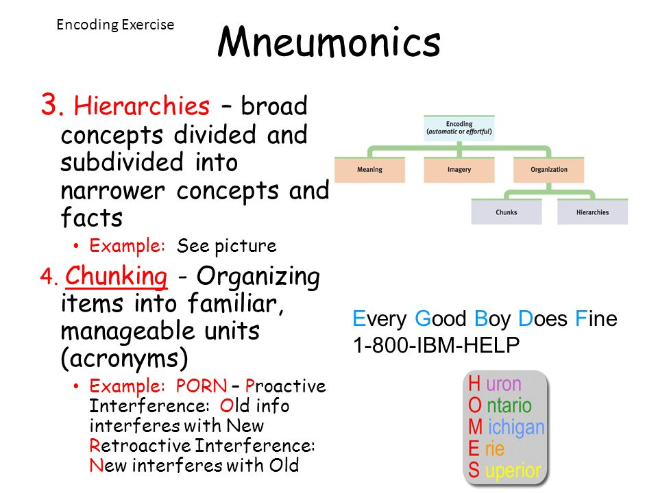 Mneumonics Encoding Exercise. 3. Hierarchies – broad concepts divided and subdivided into narrower concepts and facts.