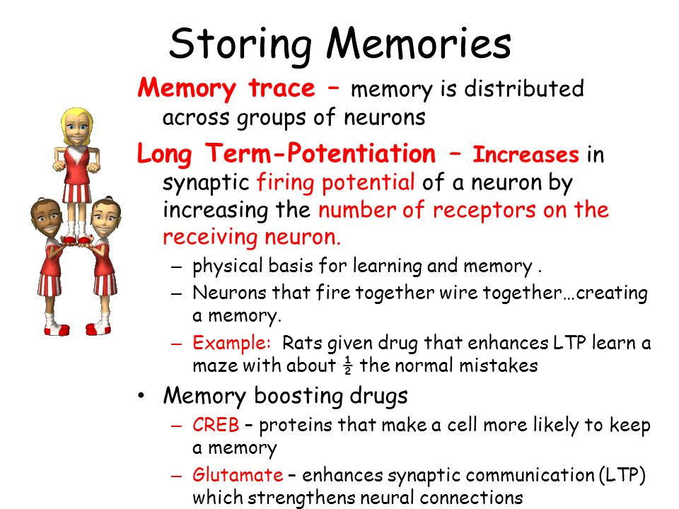 Storing Memories Memory trace – memory is distributed across groups of neurons.