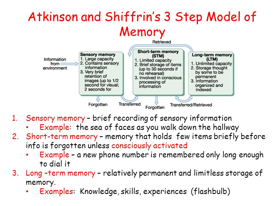 Atkinson and Shiffrin's 3 Step Model of Memory