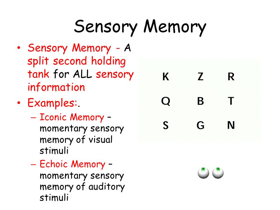 Sensory Memory Sensory Memory - A split second holding tank for ALL sensory information. Examples:.