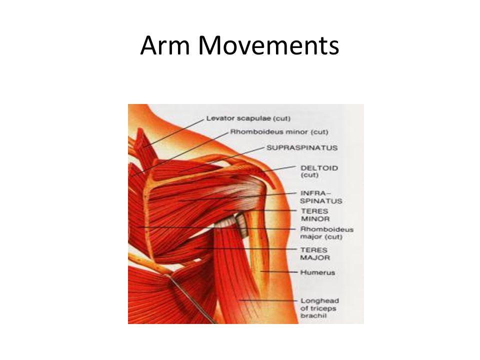 Wrist muscles anatomy