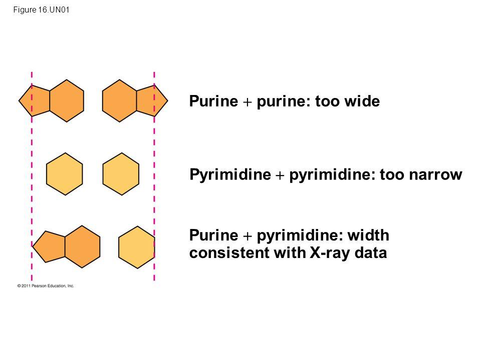 Purine  purine: too wide