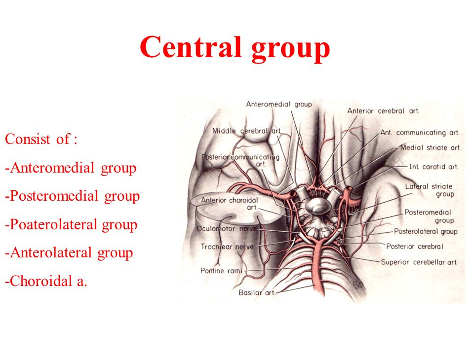 Central group Consist of : -Anteromedial group -Posteromedial group