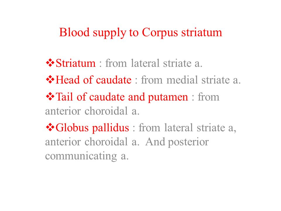 Blood supply to Corpus striatum
