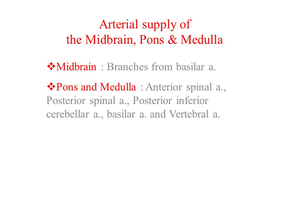 Arterial supply of the Midbrain, Pons & Medulla