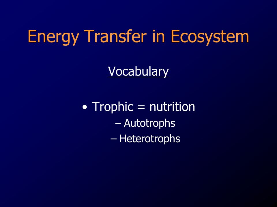 Energy Transfer in Ecosystem