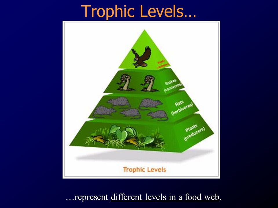 Trophic Levels… …represent different levels in a food web.