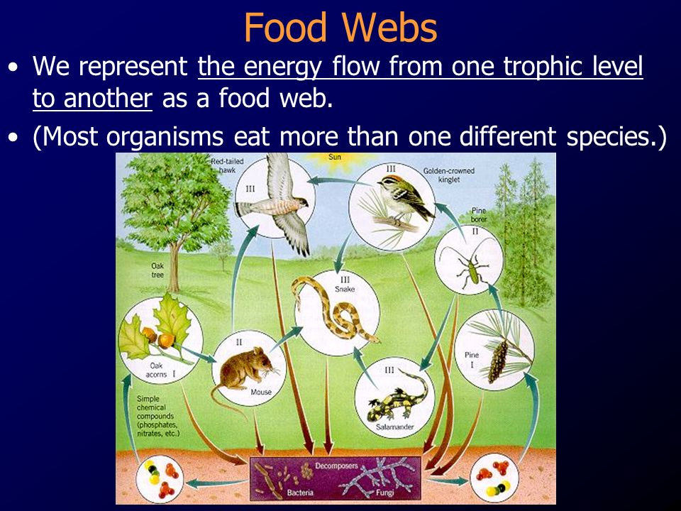 Food Webs We represent the energy flow from one trophic level to another as a food web.