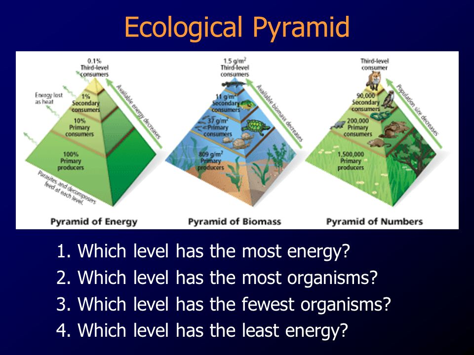 Ecological Pyramid 1. Which level has the most energy