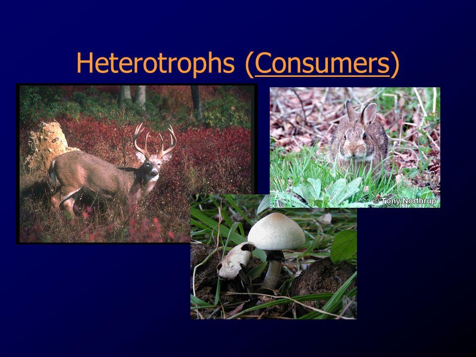 Heterotrophs (Consumers)