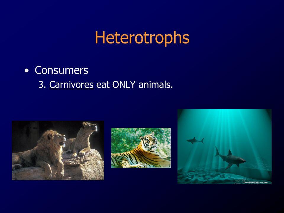 Heterotrophs Consumers 3. Carnivores eat ONLY animals.