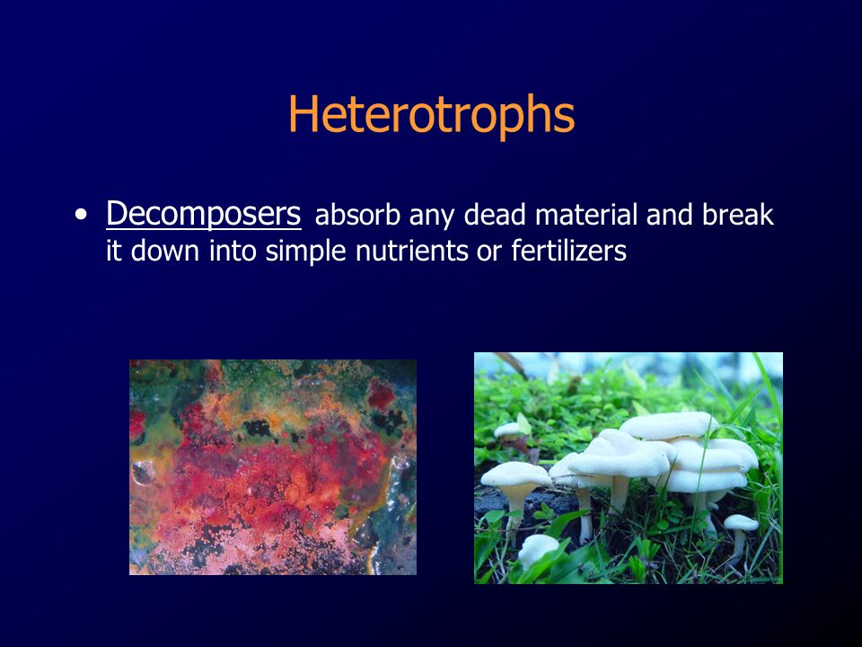 HeterotrophsDecomposers absorb any dead material and break it down into simple nutrients or fertilizers.