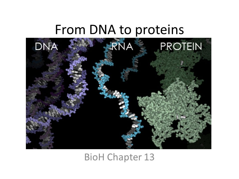 From DNA to proteins BioH Chapter 13