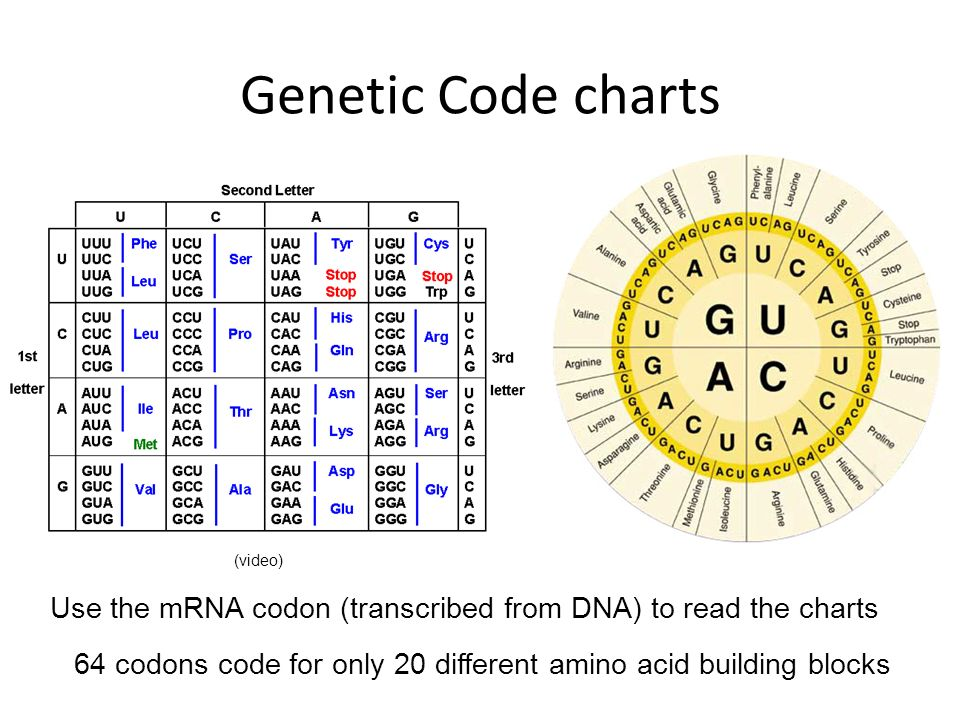 Genetic Code charts Click on the left picture to review HOW to read the genetic code chart. (video)