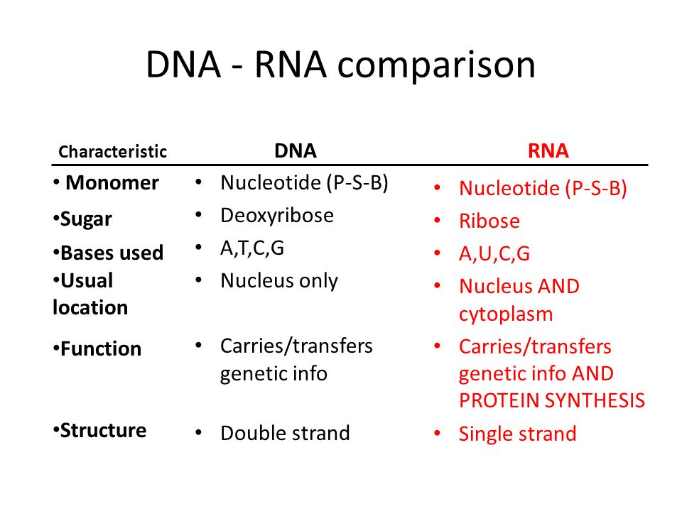 DNA - RNA comparison DNA RNA Monomer Sugar Bases used Usual location