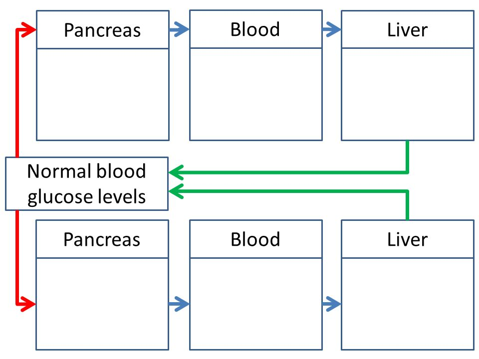Normal Level Of Blood Glucose Diagram Food Ideas