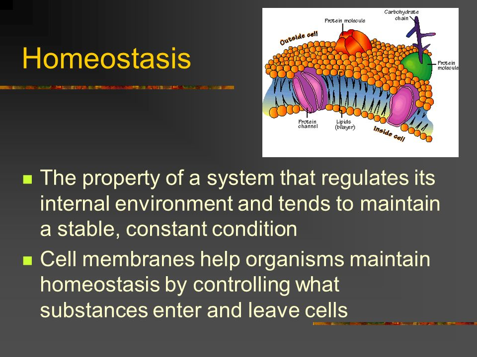Homeostasis The property of a system that regulates its internal environment and tends to maintain a stable, constant condition.