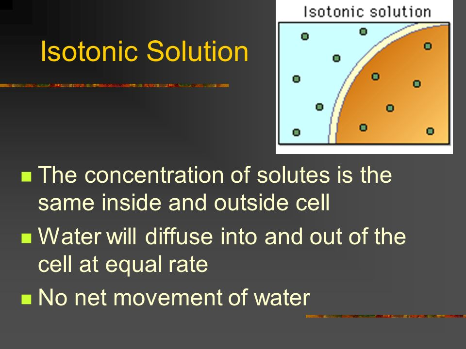 Isotonic Solution The concentration of solutes is the same inside and outside cell. Water will diffuse into and out of the cell at equal rate.