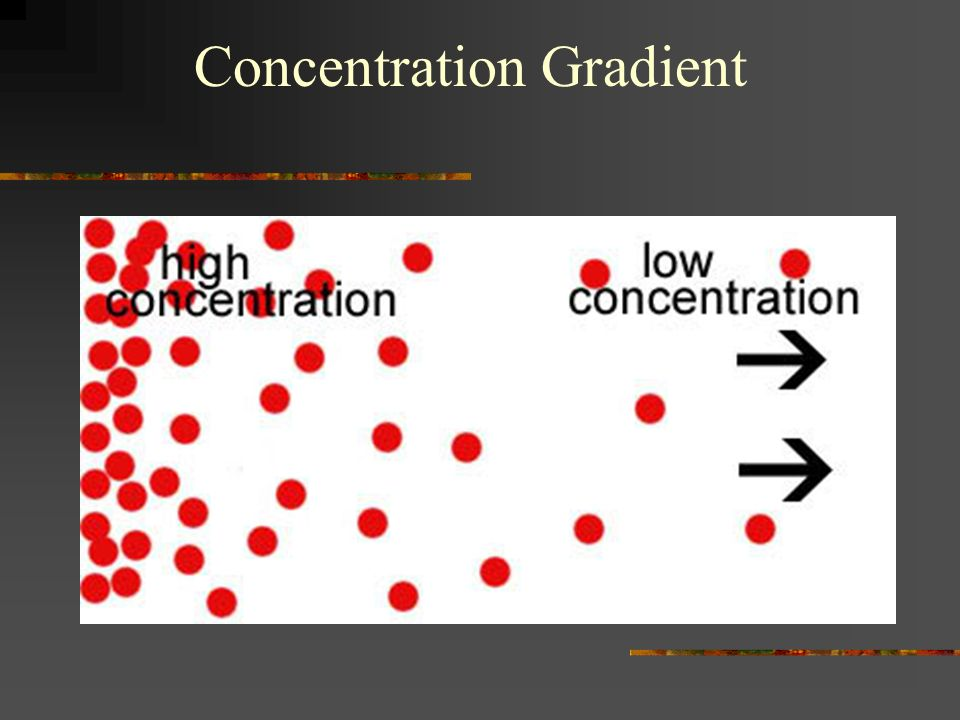Concentration Gradient
