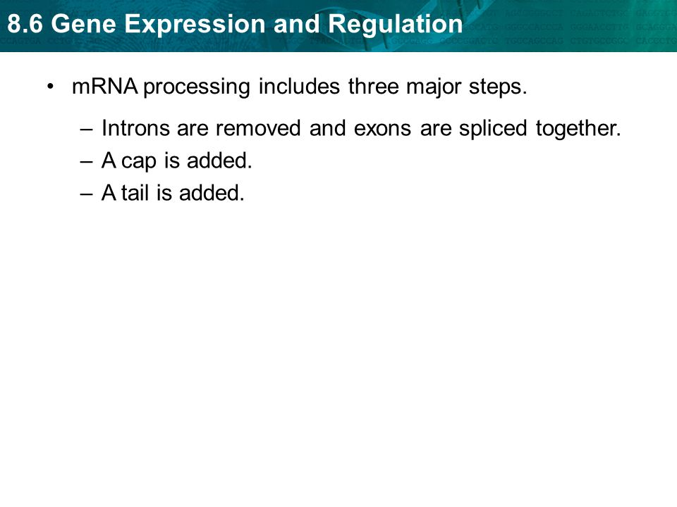 mRNA processing includes three major steps.