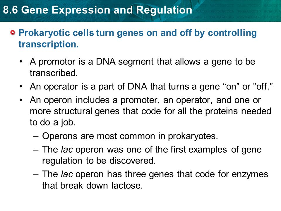 Prokaryotic cells turn genes on and off by controlling transcription.