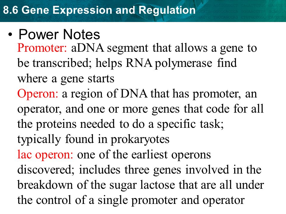 Power Notes Promoter: aDNA segment that allows a gene to be transcribed; helps RNA polymerase find where a gene starts.