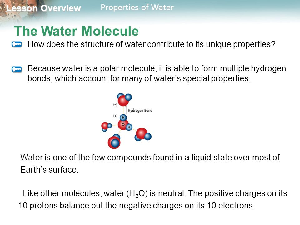Chapter 2 The Chemistry of Life - ppt download