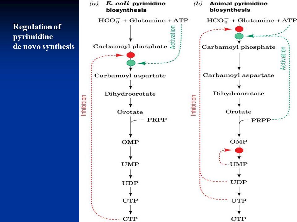 De novo protein synthesis