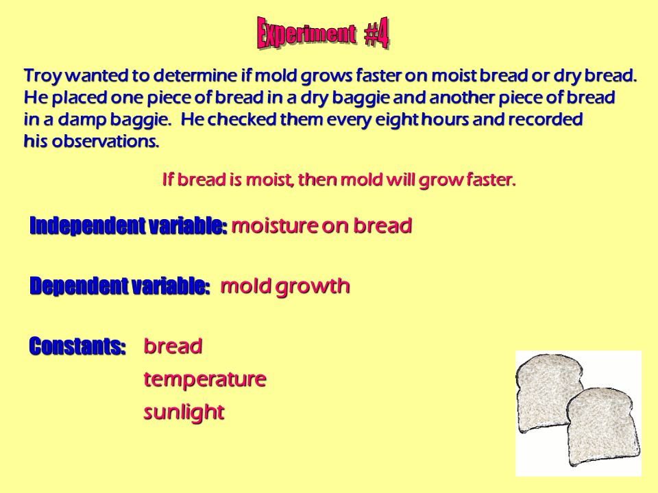 What Is Bread Mold?