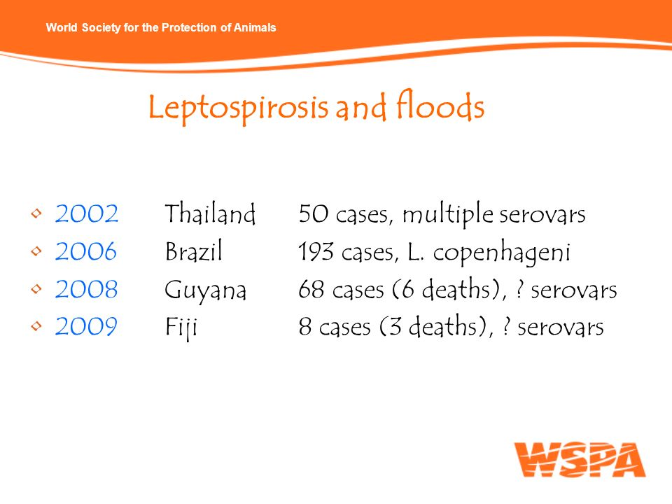 Leptospirosis and floods