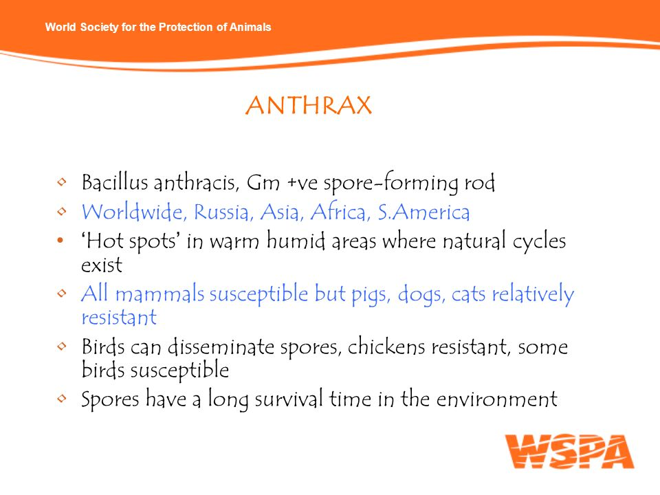ANTHRAX Bacillus anthracis, Gm +ve spore-forming rod