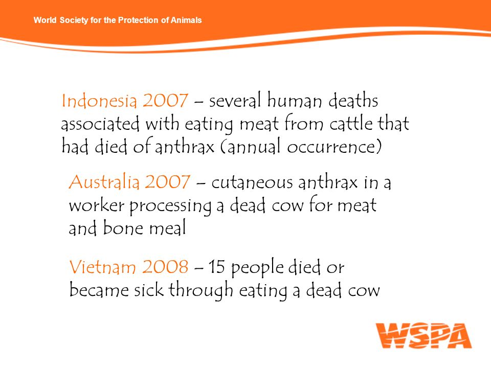 Indonesia 2007 – several human deaths associated with eating meat from cattle that had died of anthrax (annual occurrence)