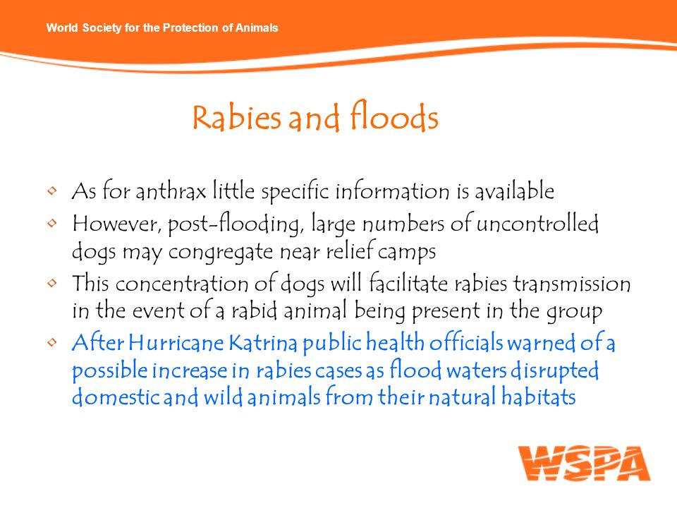 Rabies and floods As for anthrax little specific information is available.