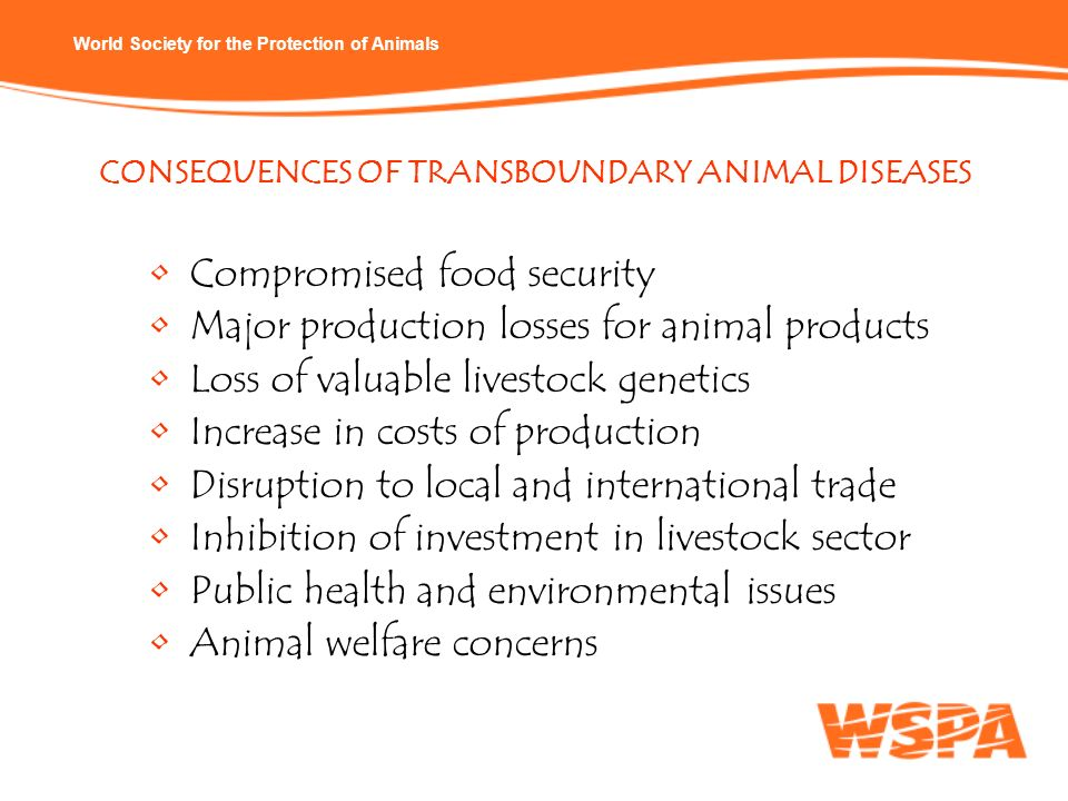 Compromised food security Major production losses for animal products