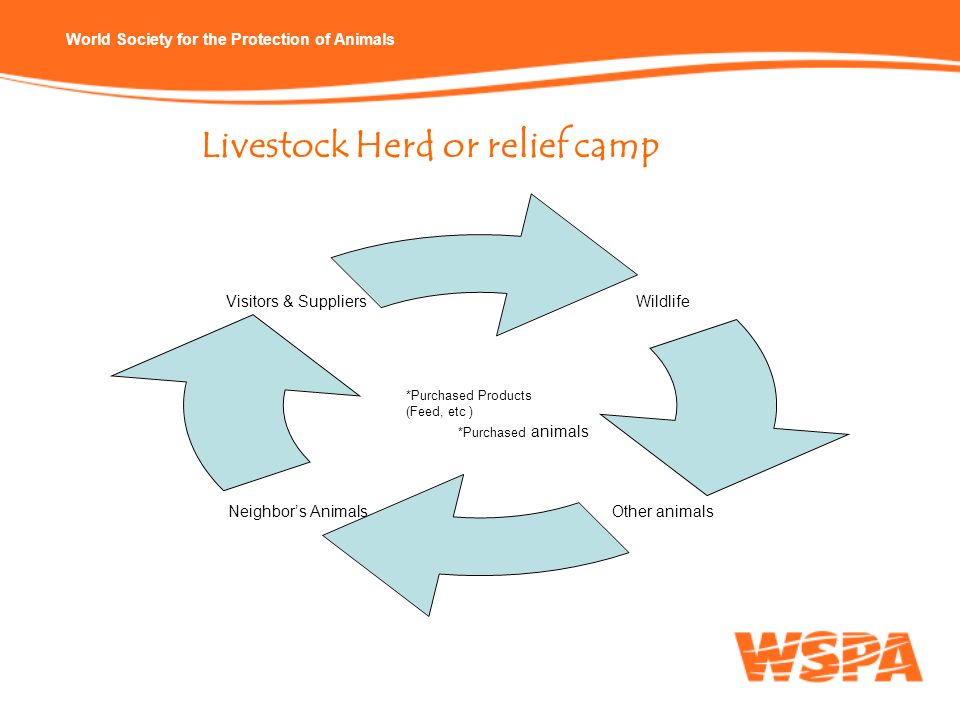 Livestock Herd or relief camp