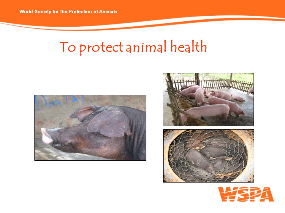 To protect animal health
