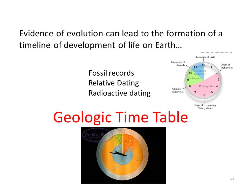 Evidence of evolution can lead to the formation of a timeline of development of life on Earth…