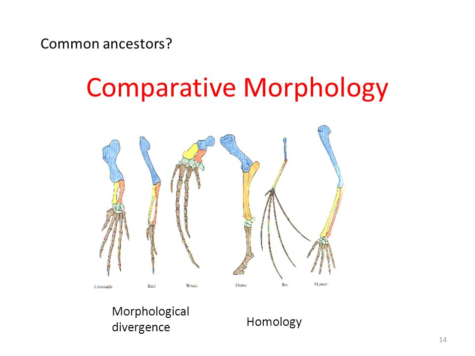 Comparative Morphology