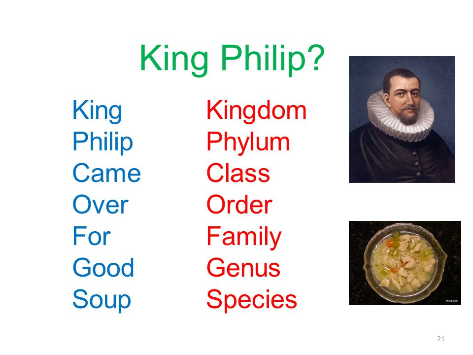 King Philip King Philip Came Over For Good Soup Kingdom Phylum Class