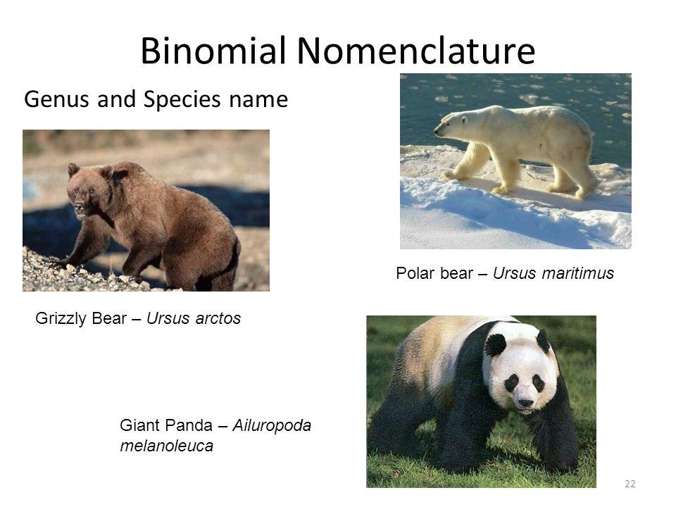 Species name